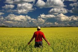 farm succession planning, estate planning, planning your estate, succession planning, wills, estates