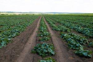 farm succession, succession planning, estate planning, wills, estate battles